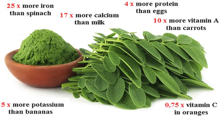 "Called the ""miracle tree"" on account of its many virtues, Moringa is very well known in India, parts of Africa, the Philippines and several other countries, yet it is relatively unknown in countries such as the USA. However it seems from the current buzz around it that it may well...More"