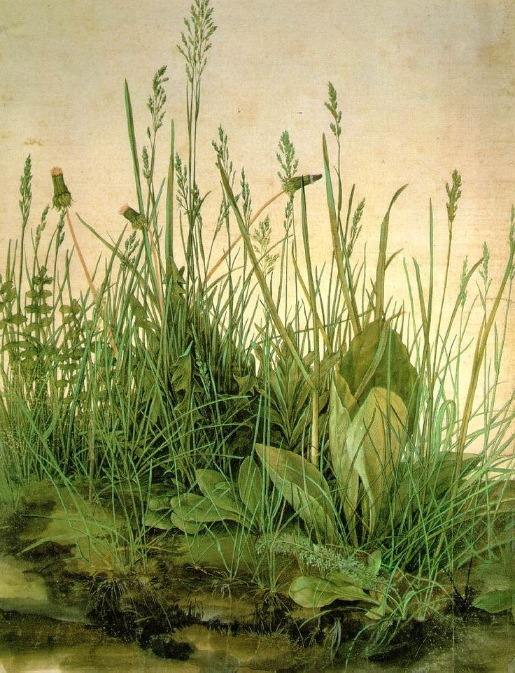 Albrecht Dürer;  The Large Turf   1503 ; Watercolor and gouache on paper, 41 x 32 cm; Graphische Sammlung Albertina, Vienna