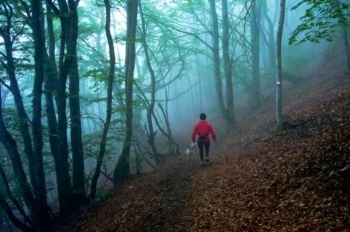 Bosc de Carlac, Bausen
