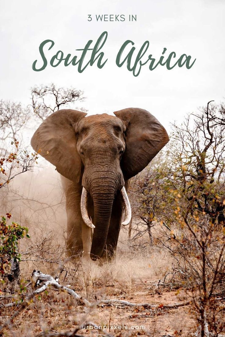 South Africa in 3 Weeks: A Perfect Itinerary for Your First