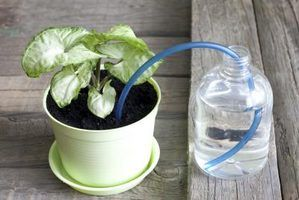 A plastic tube can stand in for a cotton wick in a self-watering planter.