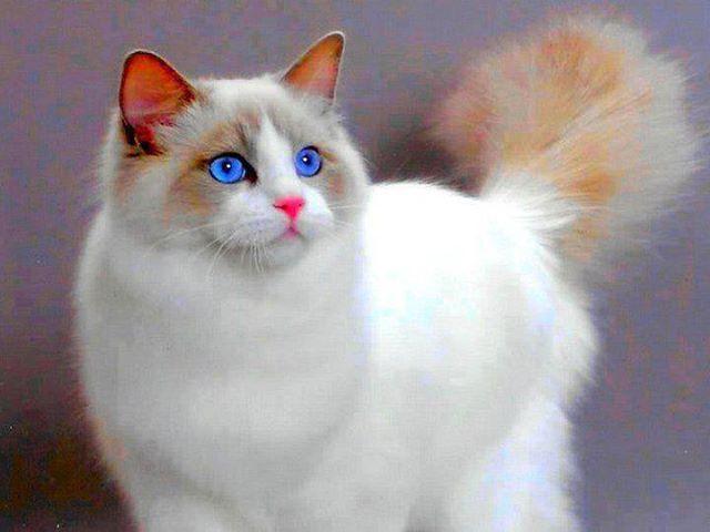 Micsoda kék szemek.....?