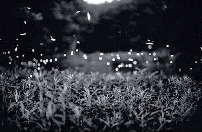 Gregory Crewdson's Fireflies
