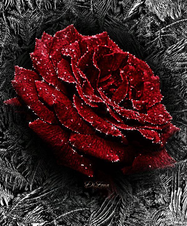 Гифка живые розы