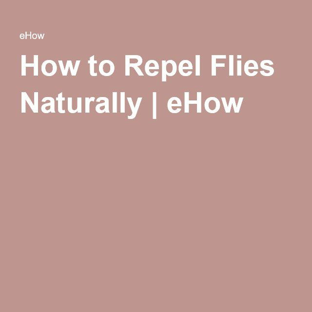 How to Repel Flies Naturally   eHow
