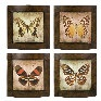 Imax Set Of Four Monarch PlaquesMonarch Plaque, Imax Sets