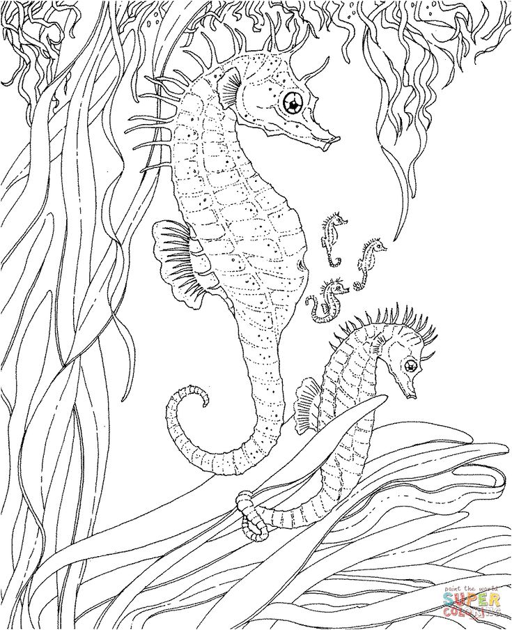 adult seahorse and seahorse babies coloring page supercoloringcom