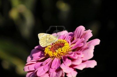 Butterfly on flower, first days of autumn