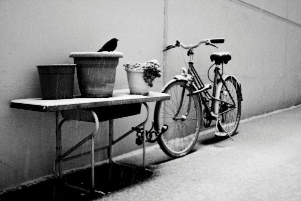 Frozen bird - Paris X