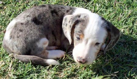 Sadie the Dachshund is enjoying life!! via dailypuppy.com: Pictures 900393, Furry Shtuff, Dachshund Pictures, Dailypuppy Com, Enjoying Life