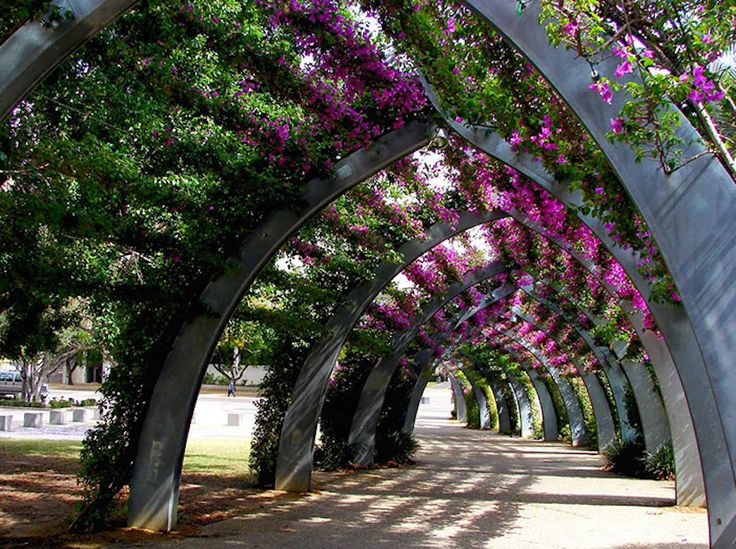The World's Most Marvelous Streets Shaded By Flowers And Trees----Brisbane, Australia.