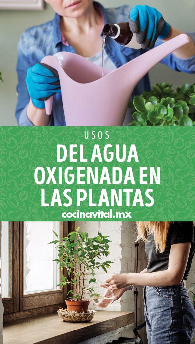 Seguro tienes una o dos botellas de agua oxigenada en tu botiquín y la utilizas para desinfectar y curar pequeñas heridas y raspones. Lo que probablemente desconoces son los usos del agua oxigenada en las plantas y aquí te los compartimos. Plants, Blog, Gardens, Container Vegetable Gardening, Container Gardening, Hand Print Ornament, Water Bottles, Blogging, Plant