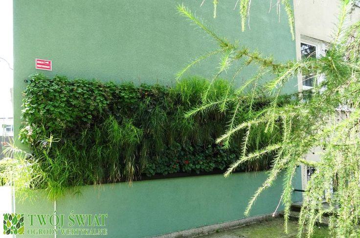 Zewnętrza zielona ściana w Lublinie od strony północnej.