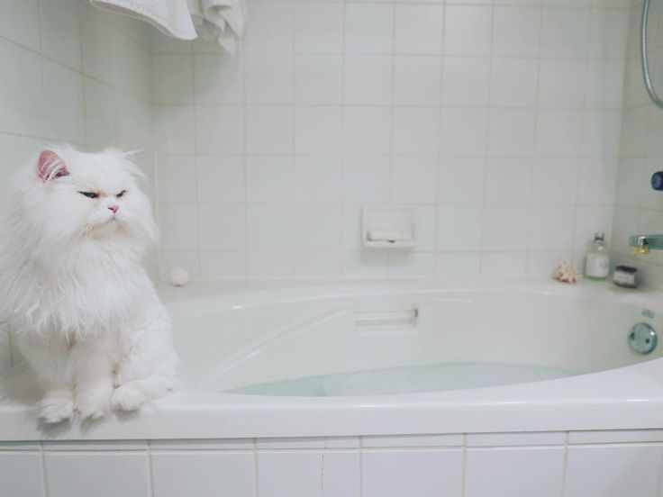 Bath time? I think not. #caturday #whitecatdontcare #cattitude #cats #cat #chat…
