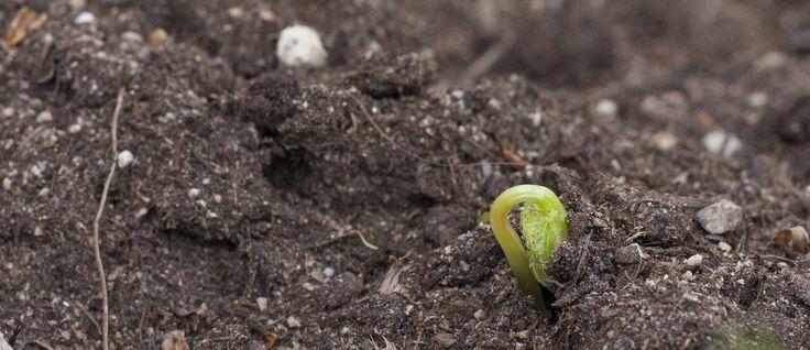 """Kevään ensimmäinen ©Viivi Huuskonen: """"Niin pienessä ja hennossa on samanaikaisesti niin paljon voimaa."""""""