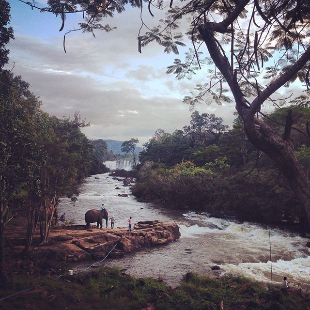 #heaven #paradise #laos #elephant #bolavenplateau #whatcanisay #grateful #pasonoroeste