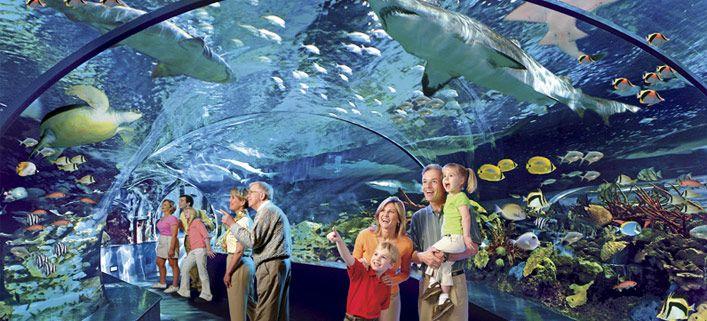 Ripley 39 S Believe It Or Not Aquarium Gatlinburg Favorite