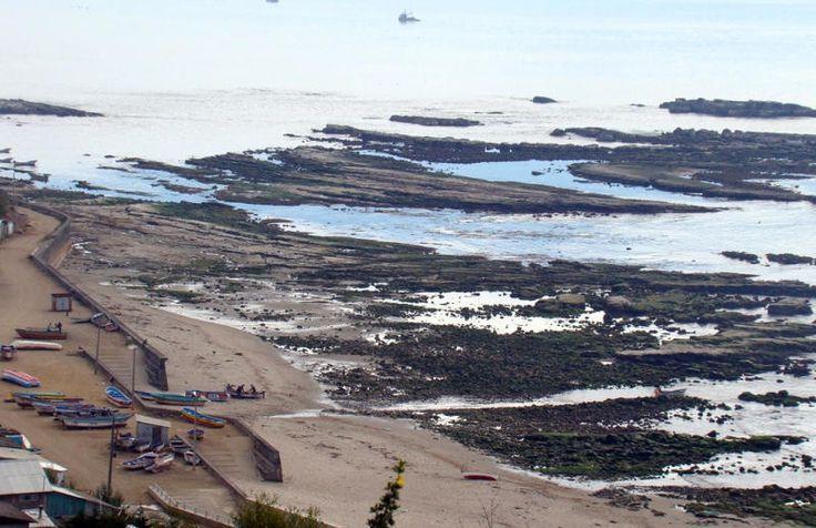 Estudio revela sorprendentes efectos ecológicos del terremoto y tsunami de Chile en el 2010.
