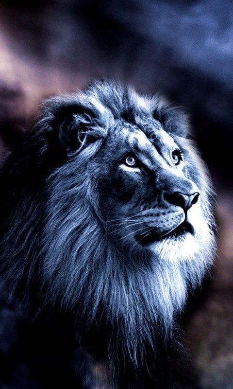 León de Judah
