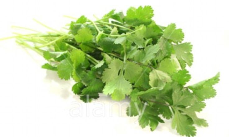The natural remedy for superbugs? Coriander oil could be used to cure food poisoning and MRSA, say scientists