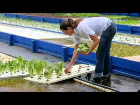 227 best aquaponics images on pinterest aquaponics for Hydroponics mesa az