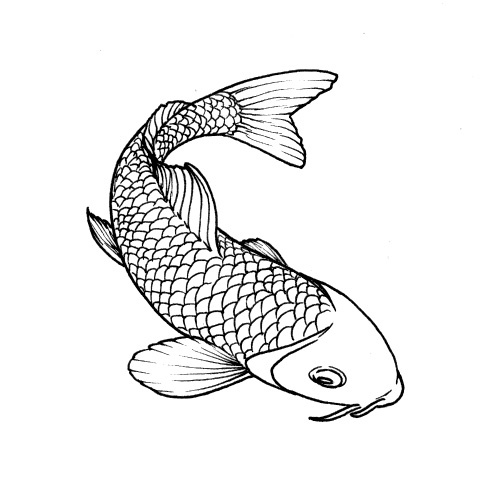 55 best images about fish drawings on pinterest japanese for Small coy fish