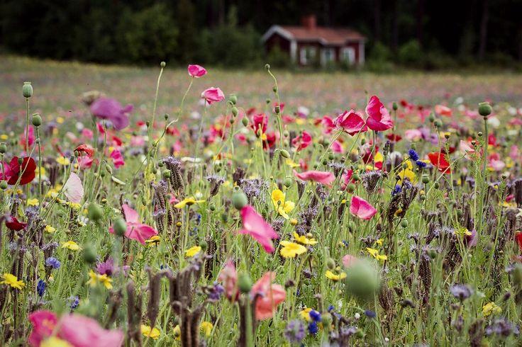 Suomen kaunein kukkapelto