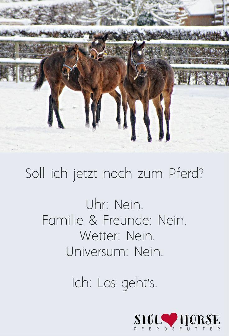 Soll ich jetzt noch zum Pferd? Uhr: Nein; Familie & Freunde: Nein; Wetter: Nein; Universum: Nein. Ich: Los geht's. #Pferd #reiten