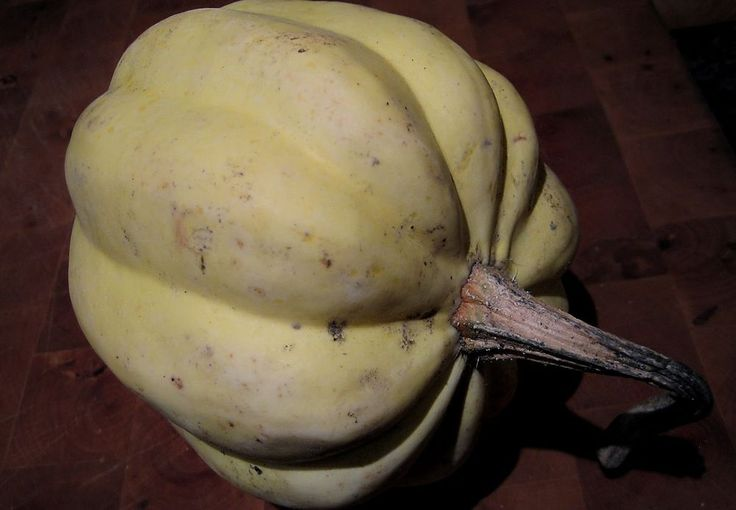 Squash Seeds - WHITE ACORN - GMO FREE - Unique Outer Shell - Heirloom - 10 Seeds
