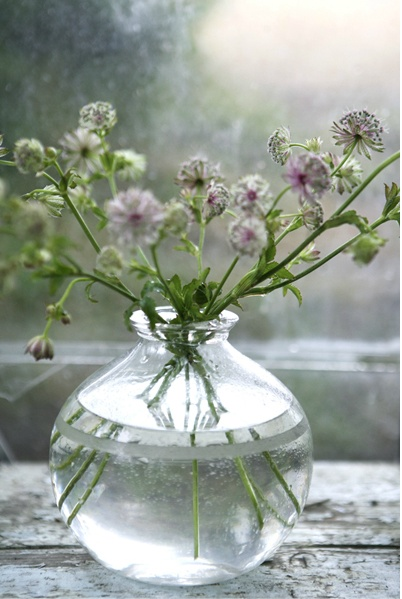 Tiny Home Designs: 1000+ Images About Astrantia On Pinterest