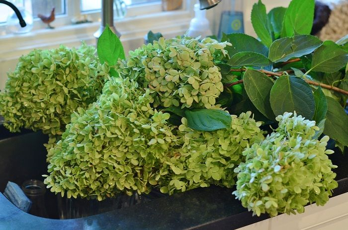How to Dry Hydrangeas - Redeem Your Ground | RYGblog.com