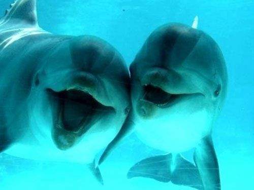 15 Reasons Dolphins Are More Awesome Than Other Animals