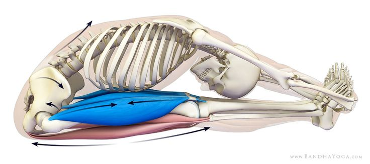 Flex the femur muscle to a safe forward fold - it will help tuck the tailbone properly