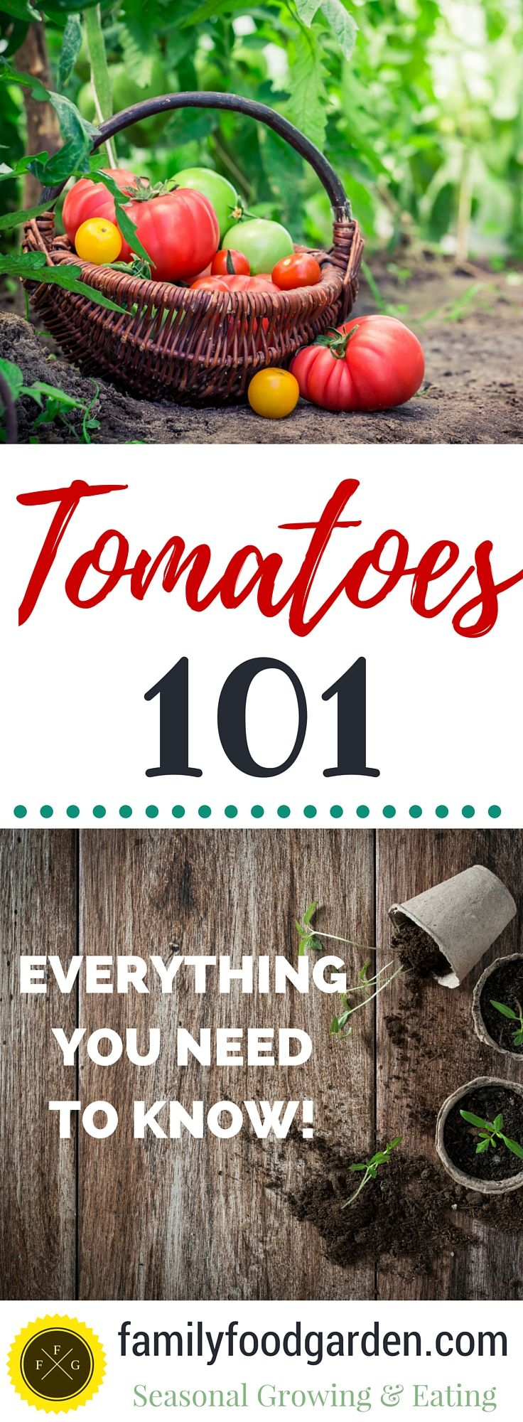 How to grow tomatoes, troubleshoot tomato diseases, trellis your tomatoes, preserve & eat!