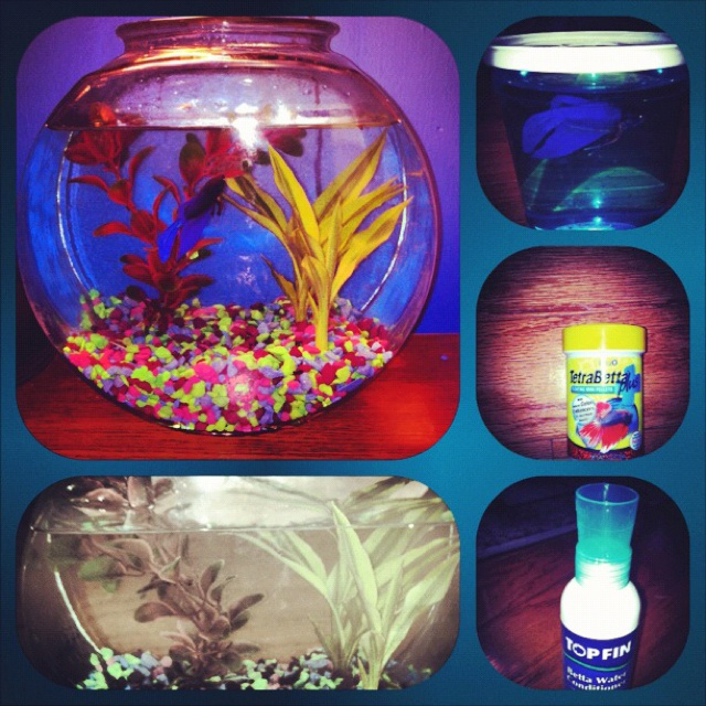 My Saturday project! I got a fish! Yayy! Idk what to name him though.