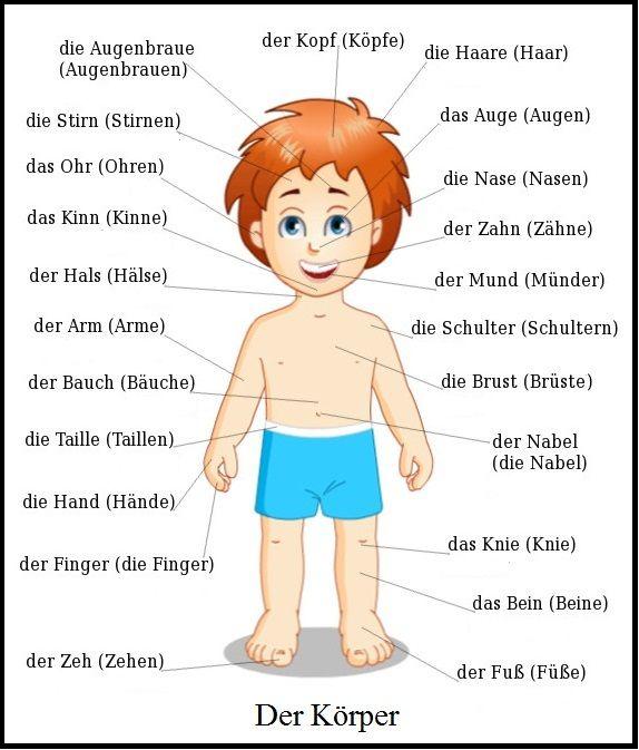 Der Körper und die Körperteile   Learn German Online