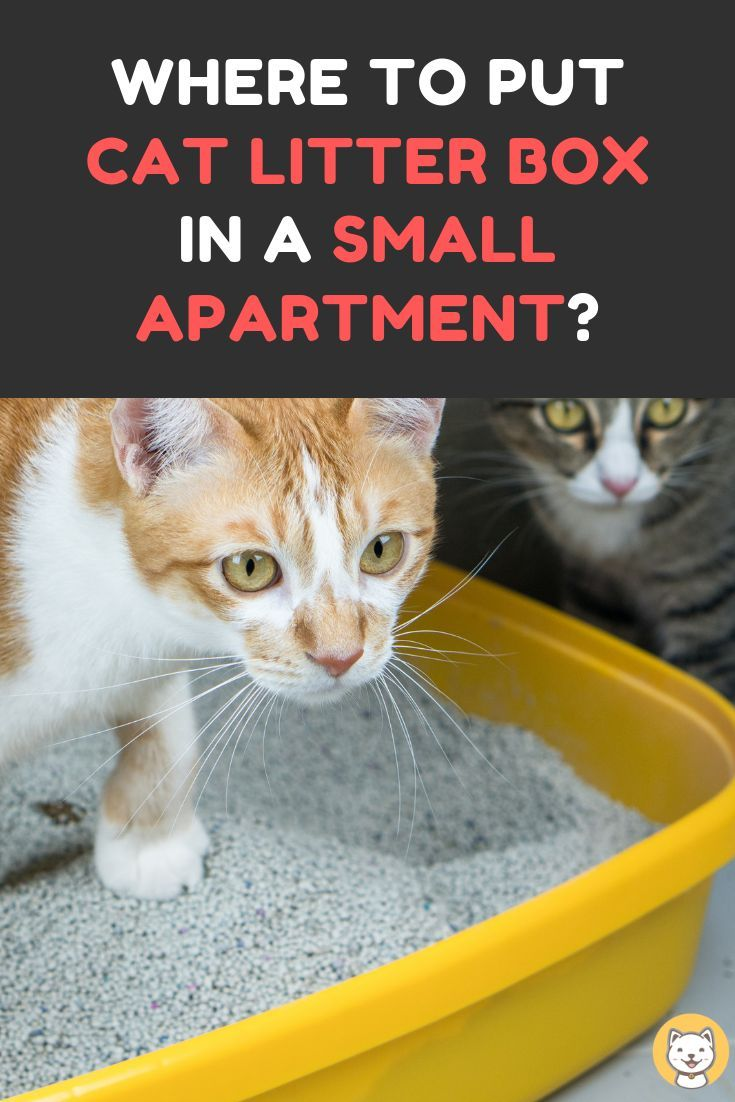 Where To Put A Cat Litter Box In A Small Apartment With Images Cat Litter Box