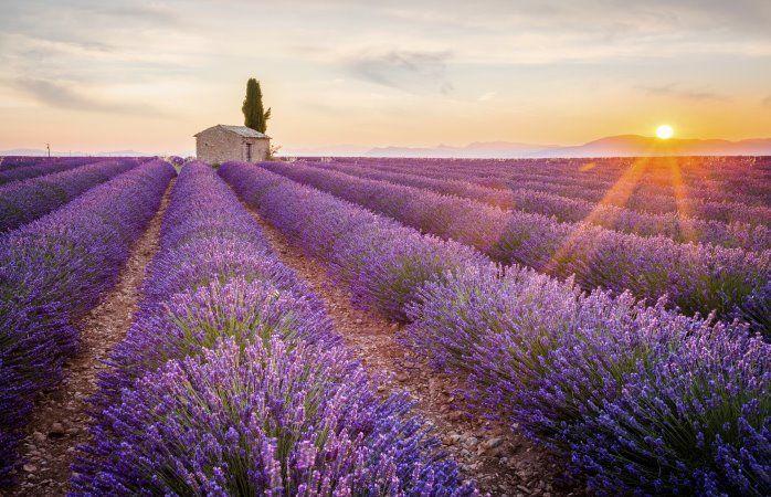 Les champs de lavande du Plateau de Valensole – Alpes-de-Haute-Provence #momondo