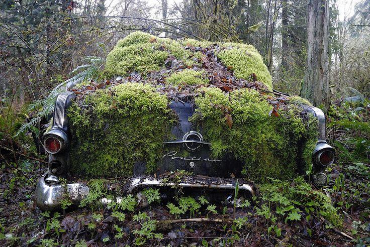Amazing forgotten car junkyard