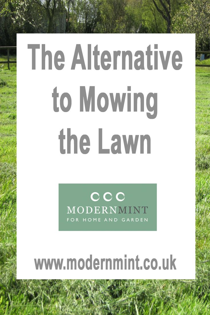 Mowing the lawn can be a complete hassle - so is there an alternative? Why can you do to avoid mowing the lawn? Click here to read some tips and advice of pin to save and read later!