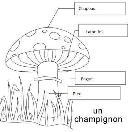 Ecole élémentaire MONTJOLY - CHAMALIERES