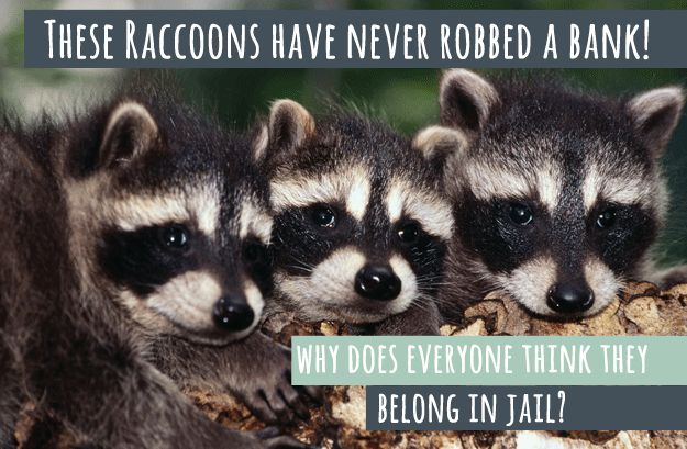 10 Animal Stereotypes That Just Aren't True, So Stop It