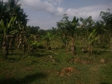 1 acrer agricultural land for sale at Varadhur,wayanad. It is situated in kalpetta-Mananttavady route.The property is worth for money.