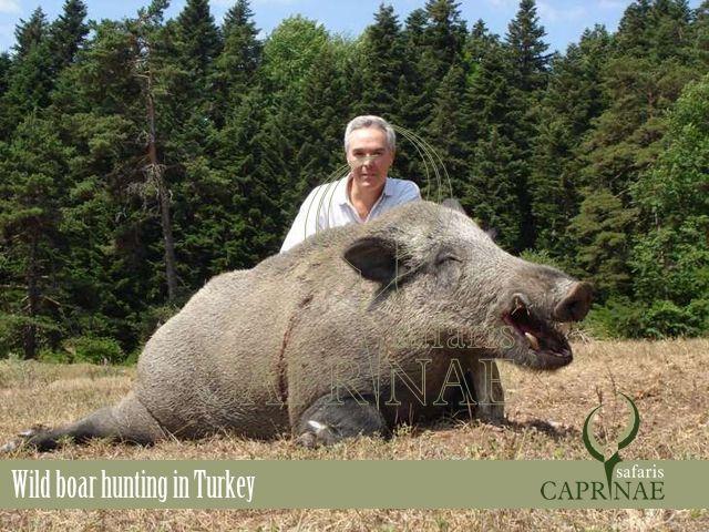 Wild boar hunting in Turkey http://riflescopescenter.com/rifle-scope-reviews/