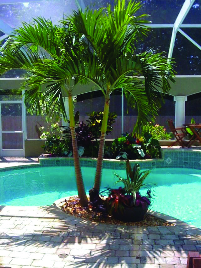 11 Cheap And Simple Pool Landscaping Ideas Backyard Pool