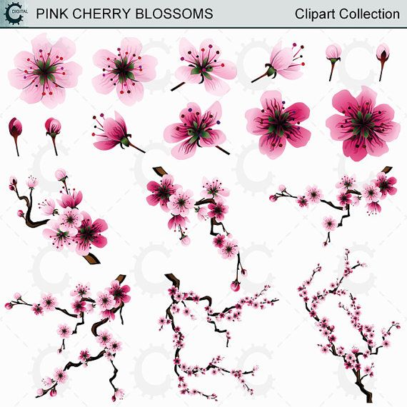 Pink Sakura/Cherry Blossom Clipart Collection
