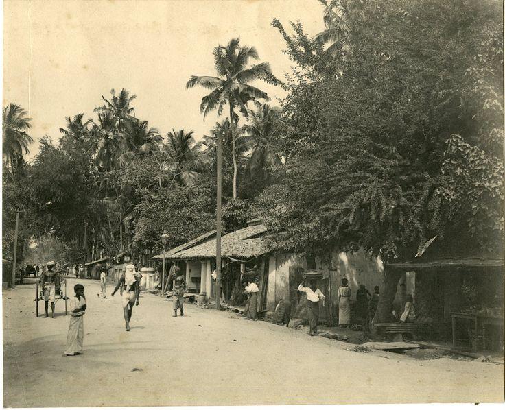 Ceylan Platé    #Asie_Asia #Ceylan_Ceylon
