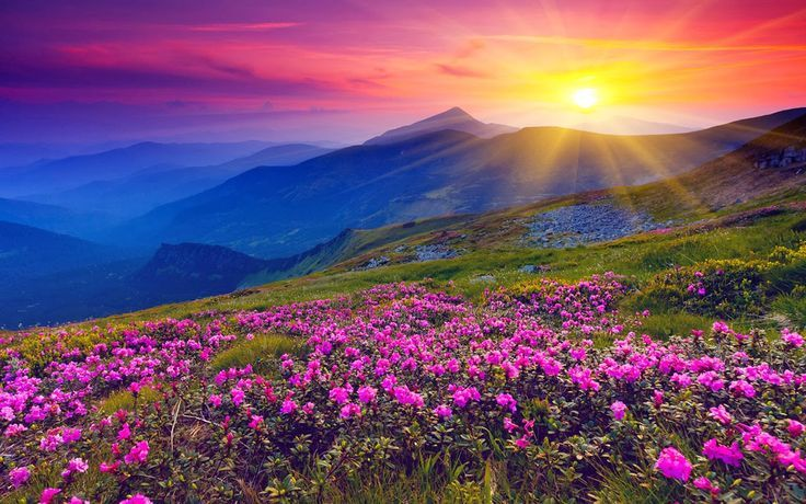 Valley of Flowers Trek, Uttarakhand, India. Incredible India, Travel in India, Tour packages India, traveling in India with http://www.t2india.in