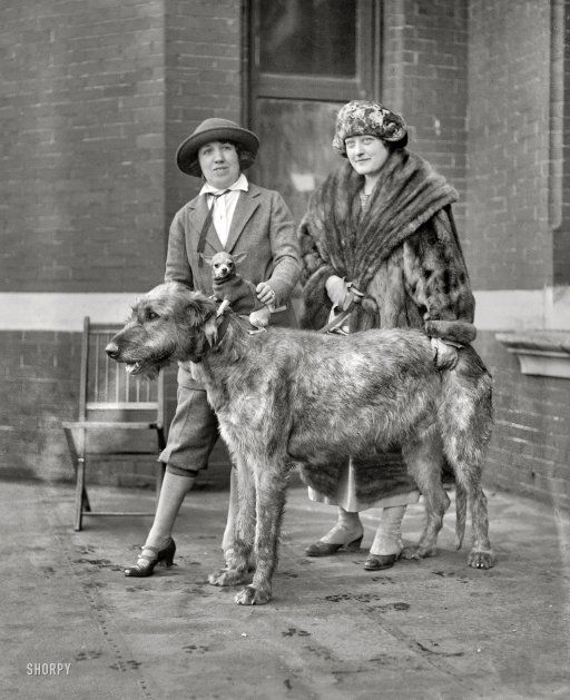 """January 1923. """"Dog show."""" On a cold day in Washington, D.C., strategies for keeping warm include wearing fur or a Chihuahua -- or both."""