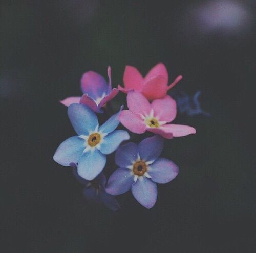 List of plants with bluish flowers ordered by botanical